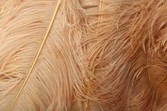 Den härliga mjuka kräm- strutsen befjädrar bakgrund Royaltyfri Bild