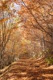Den härliga morgonen i den dimmiga höstskogen med solen rays Royaltyfria Bilder