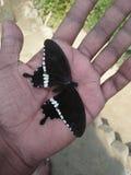 Den härliga naturen i Indien arkivfoton