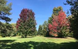 Den härliga naturstaden parkerar grön lövverk Royaltyfria Foton