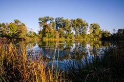 Den härliga nedgånghöstplatsen på medicin sjön parkerar i Plymouth Minnesota Översvämma med mossa och fall kulör vegetation arkivbilder