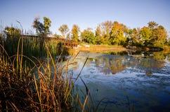Den härliga nedgånghöstplatsen på medicin sjön parkerar i Plymouth Minnesota Översvämma med mossa och fall kulör vegetation royaltyfri fotografi