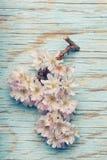 Den härliga och avslappnande zenen blommar på en ljus turkosbackgroun Royaltyfri Fotografi