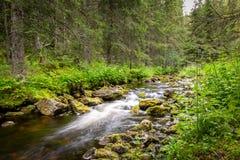 Den härliga och fridsamma platsen med en skogström med mossa vaggar i grön omgivning arkivbild