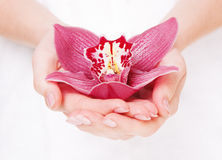den härliga orchiden gömma i handflatan Royaltyfria Bilder