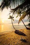 Den härliga paradisön med stranden och havet runt om kokosnöten gömma i handflatan Arkivbilder