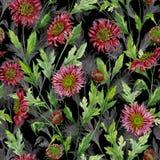 Den härliga röda krysantemumet blommar med gråa översikter på svart bakgrund seamless botanisk modell royaltyfri illustrationer