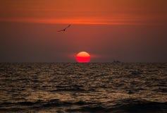 Den härliga röda solnedgången med fåglar och skepp på Goa sätter på land, Indien Arkivfoton