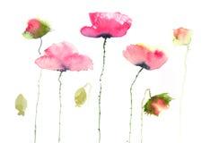 Den härliga röda vallmo blommar på vit Fotografering för Bildbyråer