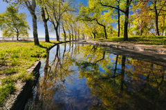 Den härliga reflexionen av träd i en pöl i en stad parkerar i ottan I Royaltyfria Foton