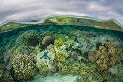 Den härliga reven blir grund in av Solomon Islands royaltyfri bild