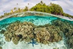 Den härliga reven och sjöstjärnan blir grund in av Solomon Islands royaltyfri foto
