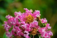 Den härliga rosa blomman som blommar i, parkerar utomhus- fotografering för bildbyråer