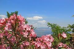 Den härliga rosa färgen blommar med havssikten Royaltyfri Bild