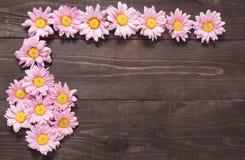 Den härliga rosa färgen blommar på träbakgrunden för att planlägga yo Arkivfoto