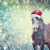 Den härliga söta hästen med jultomtenhatten på julbakgrund av snö och granen förgrena sig arkivbild