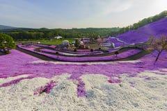 Den härliga Shibaen Sakura Arkivbilder