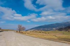 Den härliga sikten av berget betar Royaltyfri Foto
