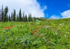 Den härliga sikten av de alpina meadosna på solen når en höjdpunkt Royaltyfria Foton