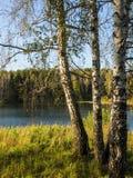 Den härliga sikten av en liten sjö kantade vid gröna träd på den molniga aftonen för hösten Royaltyfria Bilder