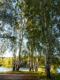 Den härliga sikten av en liten sjö kantade vid gröna träd på den molniga aftonen för hösten Royaltyfri Bild