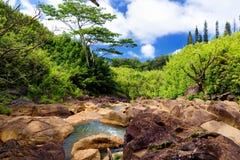 Den härliga sikten av en ström som between flödar, vaggar, lokaliserat längs den berömda vägen till Hana på den Maui ön, Hawaii royaltyfri fotografi