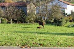 Den härliga sikten av hästen och hon behandla som ett barn Royaltyfria Foton