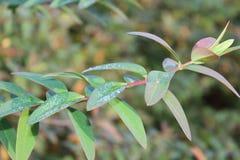 Den härliga sikten av den lilla växtbilden för ståenden med vatten pryder med pärlor Royaltyfri Fotografi
