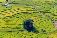 Den härliga sikten, risfält terrasserar på Sapa, Vietnam Royaltyfria Bilder