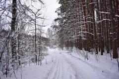 Den härliga skogen i snön, snöig väg, övervintrar omkring, övervintrar saga arkivbild