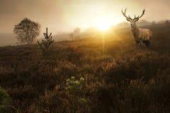 Den härliga skogen landskap av dimmig soluppgång i skog   Arkivfoton