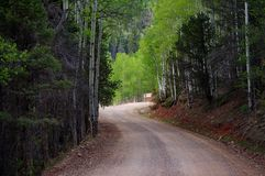 Den härliga slingriga smutsbergvägen sörjer igenom och den asp- skogen royaltyfria bilder