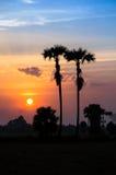 Den härliga solnedgång- och silhouettepalmträdet på skymning tajmar Royaltyfri Fotografi