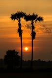 Den härliga solnedgång- och silhouettepalmträdet på skymning tajmar Arkivfoton