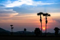 Den härliga solnedgång- och silhouettepalmträdet på skymning tajmar Arkivbilder