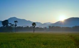 Den härliga solsken- och ricelantgården på morgon tajmar Arkivbilder