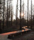 Den härliga soluppgången i skog Arkivfoton