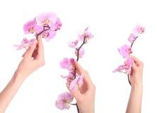 Den härliga Spa flickan med orkidén blommar det Skincare begreppet Arkivfoto