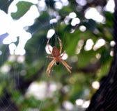 Den härliga spindeln värma sig i solen Arkivfoto