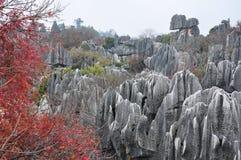 Den härliga stenskogen Royaltyfria Foton