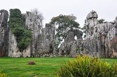 Den härliga stenskogen Arkivbild