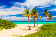 Den härliga stranden av Varadero i Kuba royaltyfri fotografi