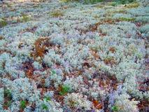 Den härliga svenska skogen 24 Royaltyfri Bild