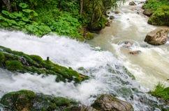 Den härliga tapeten mjölkar strömmen för vattenfallflödesfors Flod Kaukasus för stenigt berg i den skogIsichenko vattenfallet, Gu Fotografering för Bildbyråer