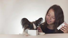 Den härliga tonåriga flickan ger en läcker gåva till en hund kontinentala Toy Spaniel Papillon på vit bakgrundsmateriellängd i fo stock video