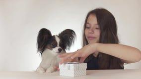 Den härliga tonåriga flickan ger en läcker gåva till en hund kontinentala Toy Spaniel Papillon på vit bakgrundsmateriellängd i fo arkivfilmer