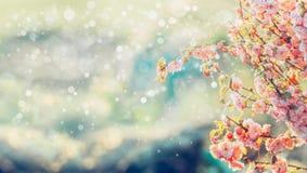 Den härliga trädblomningen i solljus och bokeh, blommande bakgrund för sommar i trädgård eller parkerar royaltyfria foton