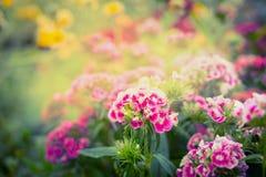 Den härliga trädgården eller parkerar blomma-, sommar- eller höstnaturbakgrund Royaltyfri Foto