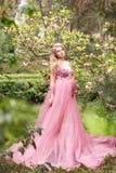 Den härliga unga gravida kvinnan i en lång sexig rosa färg klär anseende nära en blommande magnolia i natur Royaltyfria Foton