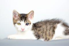 Den härliga unga kattungeståenden, katt med kattinfluensa smittade det sjuka ögat i en veterinär- klinik royaltyfri foto